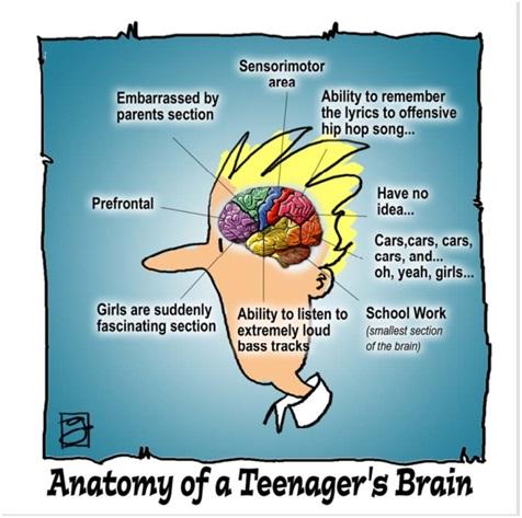 Das Gehirn eines Jugendlichen vor der Pubertät