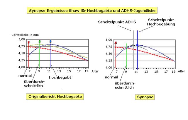 Vergleich der Entwicklung eines hochbegabten Kindes im Gegensatz zu der Entwicklung eines Kindes, welches unter der psychischen Störung ADHS leidet.