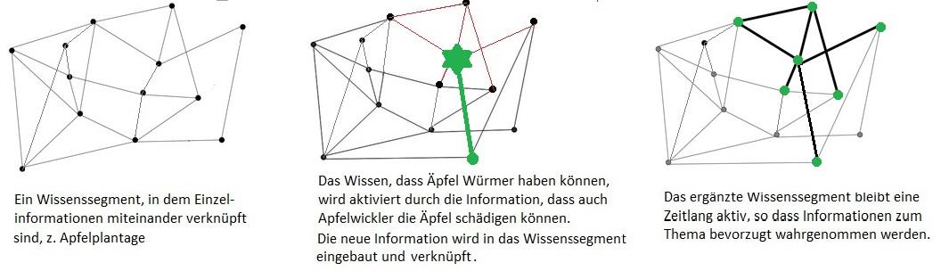 Aktivierung des kognitiven Netzes bei neuer Information